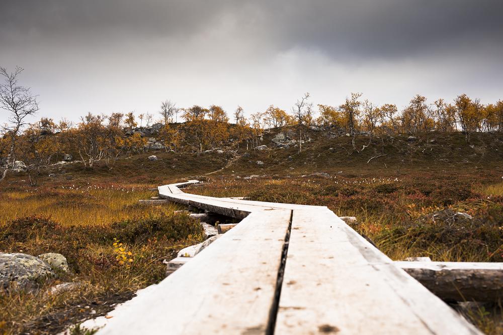 https://lainjacksonphotography.com/esp/2017_spitzbergen/12_13/017